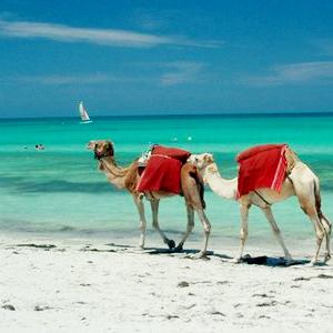 Pacote Grande Roteiro da Tunísia