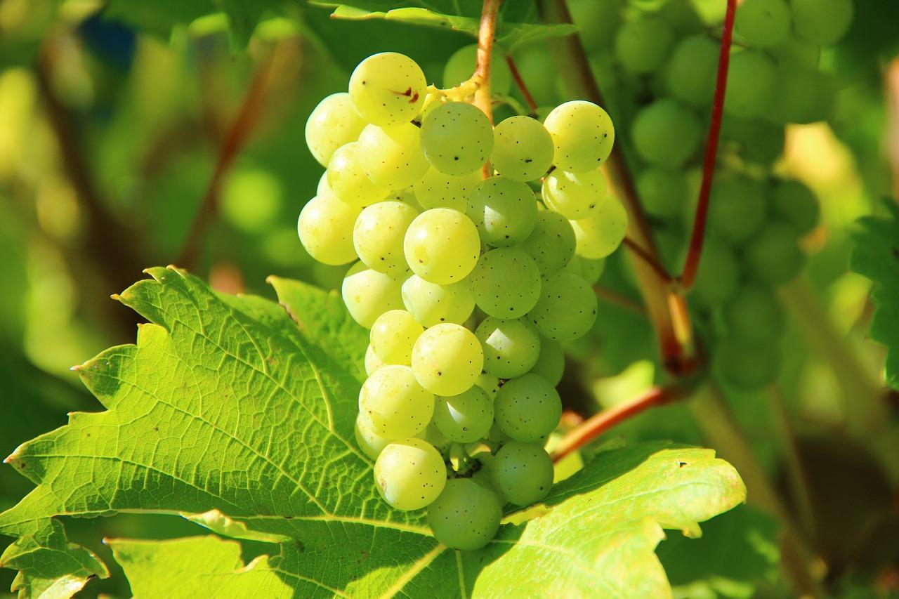 Rota dos vinhos na Alemanha