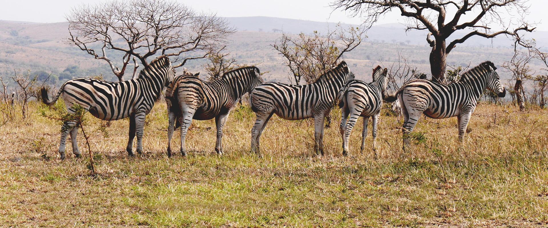 Pacotes de Viagem para África do Sul