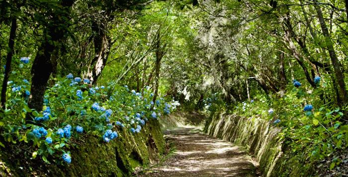 Floresta Ilha da madeira
