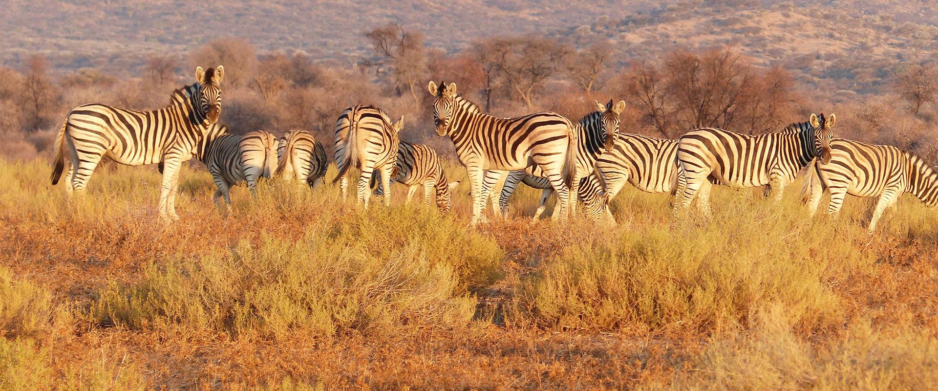 Pacotes de Viagem para África