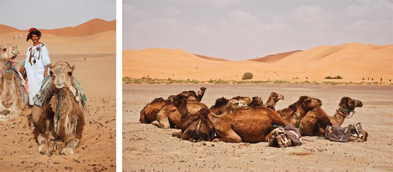 Berbere e dromedários no Deserto do Saara. Foto por Karina Cordeiro.